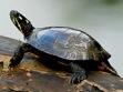 Reptiles & More